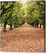 Orchard In The Morning Acrylic Print