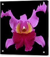 Orchid 002 Acrylic Print