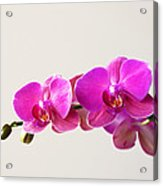 Orchid 1345 Acrylic Print