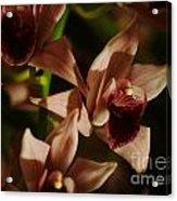 Orchid 137 Acrylic Print