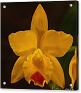 Orchid 139 Acrylic Print