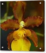 Orchid 140 Acrylic Print
