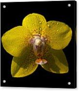 Orchid 15 Acrylic Print