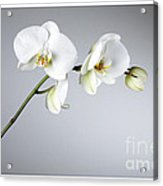 Orchid 1a Acrylic Print