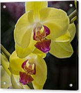 Orchid #5 Acrylic Print