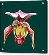 Orchid Alone Acrylic Print