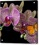 Orchid And Orange Butterfly Acrylic Print