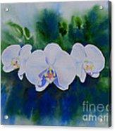 Orchid Blast Acrylic Print