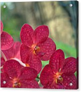 Orchid Bugs Acrylic Print