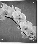 Orchid Bw Acrylic Print by Hannes Cmarits