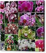 Orchid Collage 1 Acrylic Print
