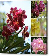 Orchid Collage Acrylic Print