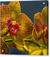 Orchid Color Acrylic Print