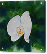 Orchid Dance 1 Acrylic Print