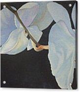 Orchid Dance II Acrylic Print