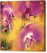 Orchid Dream Acrylic Print