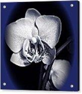 Orchid Elegance 2 Acrylic Print
