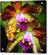 Orchid Elegance Acrylic Print