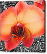 Orchid Explosion Acrylic Print