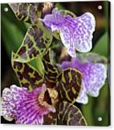 Orchid Five Acrylic Print