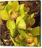 Orchid Flourish Acrylic Print