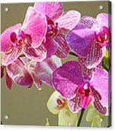 Orchid Flowers Art Prints Pink Orchids Acrylic Print