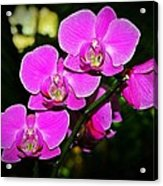 Orchid Flutter Acrylic Print by Liudmila Di
