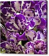 Orchid Grouping Acrylic Print