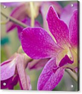 Orchid - Haliimaile Spring Pink Acrylic Print