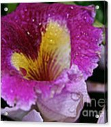 Orchid Heart And Soul Acrylic Print