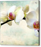 Orchid Heaven Acrylic Print