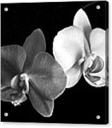 Orchid In Black And White Acrylic Print