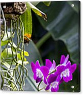 Orchid In Bloom Acrylic Print