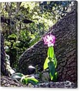 Orchid In Tree 2 Acrylic Print