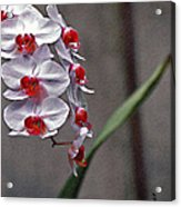 Orchid In Window Acrylic Print