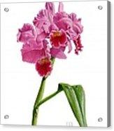 Orchid - Lc. Culminant La Tuilerie Acrylic Print