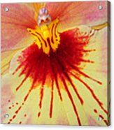 Orchid Of Color Acrylic Print