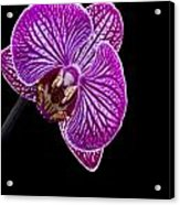 Orchid On Black Background Acrylic Print