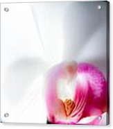 Orchid On Black Acrylic Print