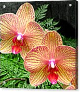 Orchid Pair Acrylic Print