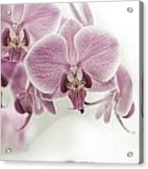 Orchid Pink Vintage Acrylic Print