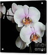 Orchid Portrait Acrylic Print