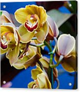 Orchid Pt 1 Acrylic Print
