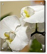 Orchid Purity Acrylic Print
