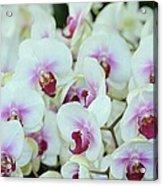 Orchid Sea Acrylic Print