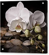 Orchid - Sensuous Virtue Acrylic Print by Tom Mc Nemar