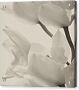 Orchid Sepia Acrylic Print