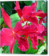 Orchid Series 3 Acrylic Print