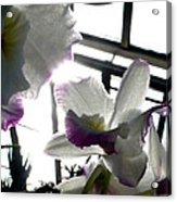 Orchid Series 4 Acrylic Print