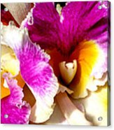 Orchid Series 6 Acrylic Print